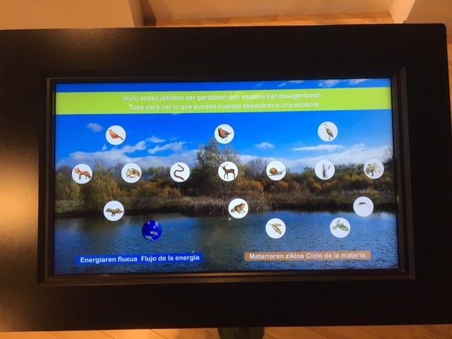 pantalla interactiva ataria especies del humedal de salburua turismo vitoria