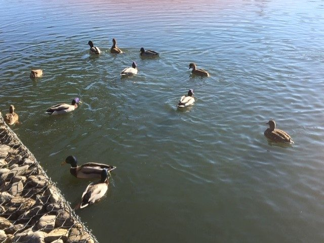 ataria patos en Vitoria niños